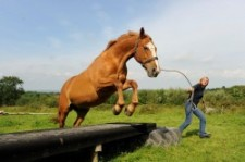 Vanessa Bee, founder of the International Horse Agility Club, is coming to North America in 2013!