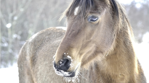 horse_head_mane_snow_26822_1920x1080