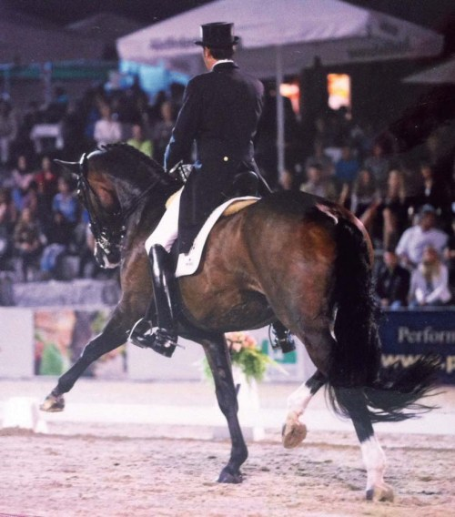 Linda's work with Meggle's Weltall has inspired her to help others use the Tellington Method with dressage horses.