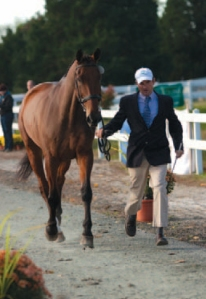 Clean and conservative is always appropriate for the horse inspection. Photo by Amber Heintzberger from MODERN EVENTING WITH PHILLIP DUTTON (www.HorseandRiderBooks.com).