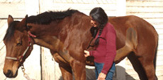 Dr. Nancy Loving is author of ALL HORSE SYSTEMS GO.