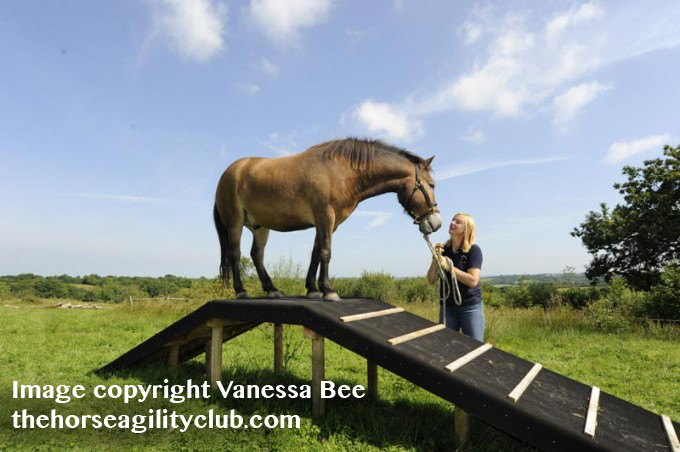 Vanessa Bee has helped spread Horse Agility as an fun and safe horse sport that anyone can learn to enjoy around the world.