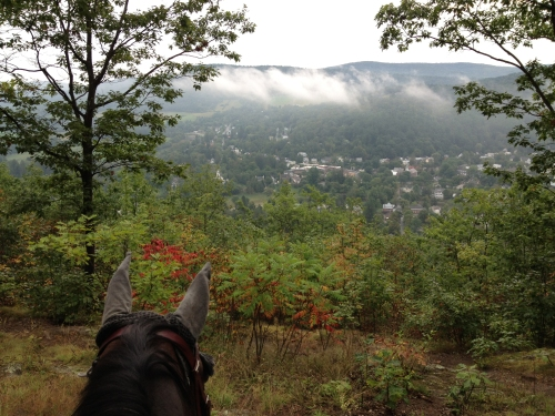 Color is coming to the VT hills...here Rob the Quarter Horse looks over the town of Woodstock.