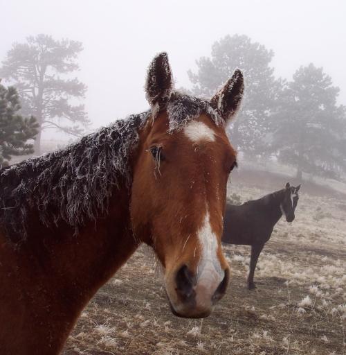 Moondo and Max enjoy the Colorado weather.