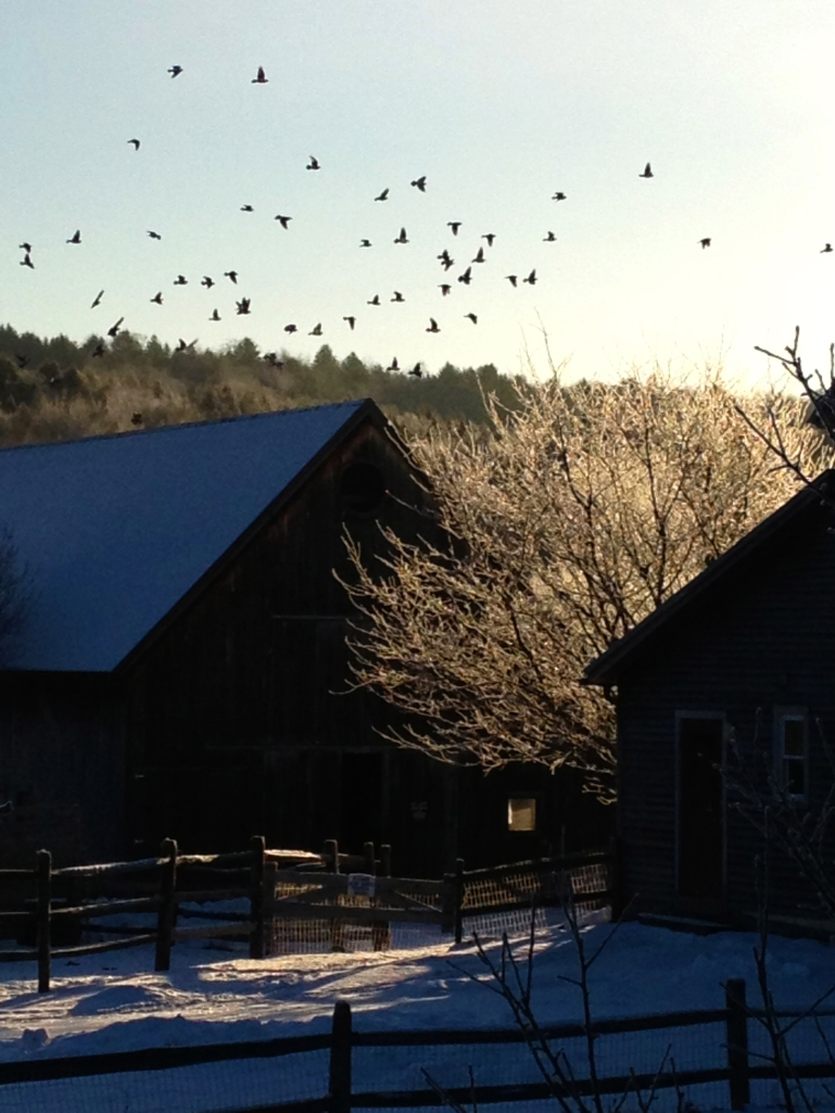 We are thankful to live and work in a beautiful place--- Trafalgar Square Farm.