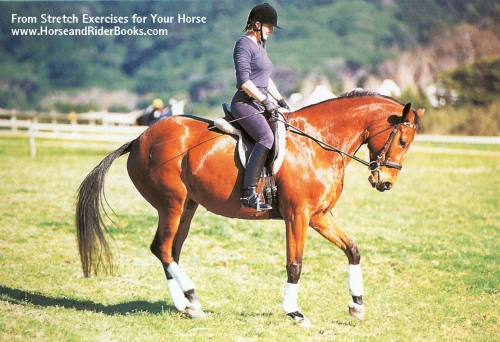 Backing up a slight incline has a very strong stretching effect on the horse's loin extensors.