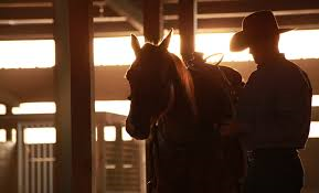 """TSB author Sean Patrick and his """"WildCard"""" colt """"Joker"""" are headed to the 2014 Road to the Horse competition."""