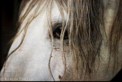 Horses can be aware of our intent...before we are. (Photo by Keron Psillas)