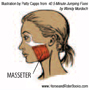 The masseter muscle is the strongest muscle in your body.