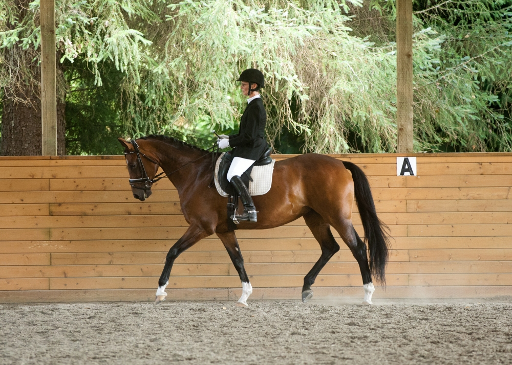 """Dr. Glosten on her mare """"DG"""" at sitting trot: She keeps spine stability with her """"abdominal seat belt"""" while allowing her legs to swing at the hip joint with DG's back."""