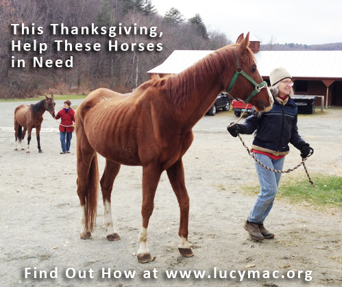 Join Trafalgar Square Books in making a donation to help support the 23 horses seized from a Woodstock farm last week.