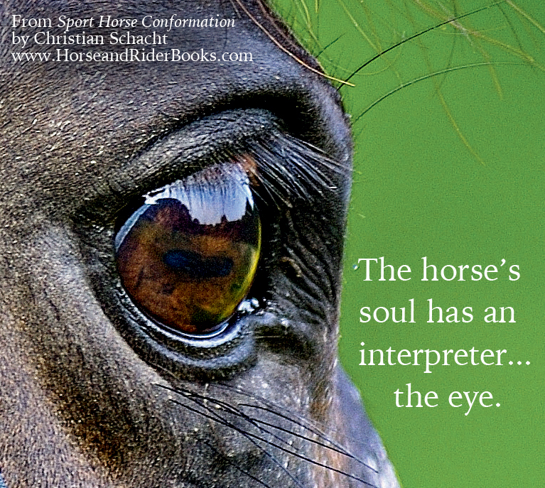 HorseConformation_53 copy