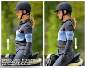 You can mobilize your pelvis by lifting and lowering your buttocks on each side of the saddle---riding is never static, it is always dynamic!