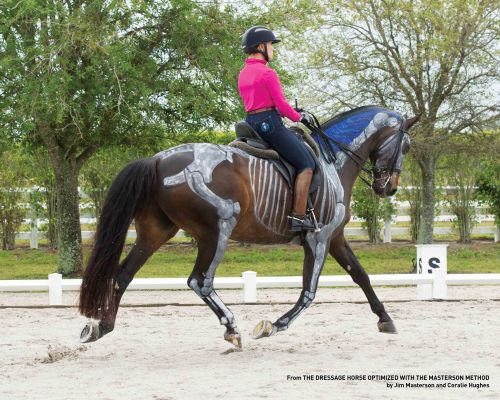 Betsy Steiner on Bacchus from THE DRESSAGE HORSE OPTIMIZED.
