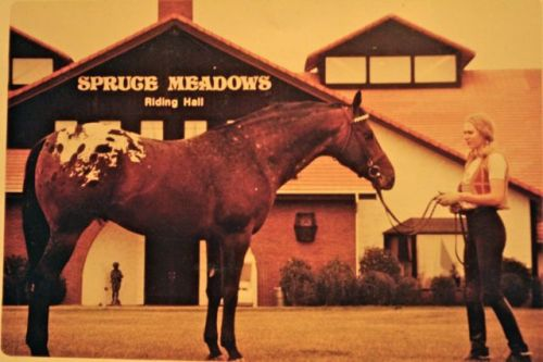 Susan with her Appaloosa at Spruce Meadows in the 1970s.