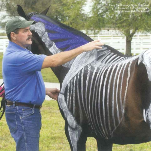 Jim Masterson indicating the scapula and the withers on a horse painted by Susan Harris, the creator of Anatomy in Motion.
