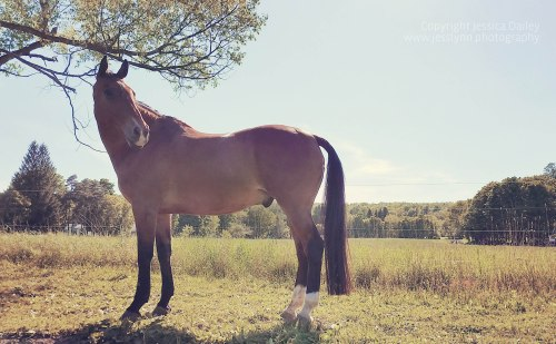 "This shot and edit reminded Jessica of a vintage Polaroid. ""I tried to get a little bit of the tree in the background, but not at an angle where it looks like the tree is growing out of the horse's back."""