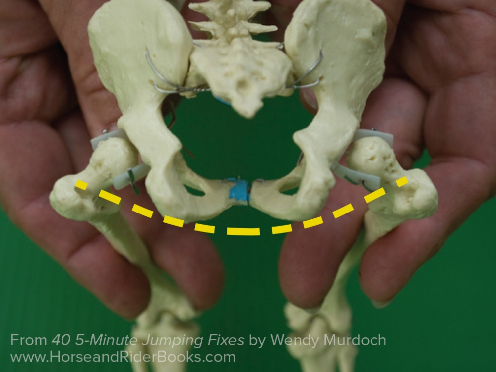 The skeleton folded into jumping position and viewed from behind. The shape of a smile is formed when the femurs are in neutral.