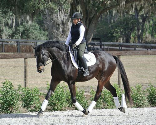 There was a time when Janice Dulak couldn't sit the trot--all that changed when she developed Pilates for the Dressage Rider.