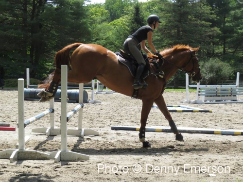TSB Publications Assistant Lila Gendal on the OTTB Rocky.
