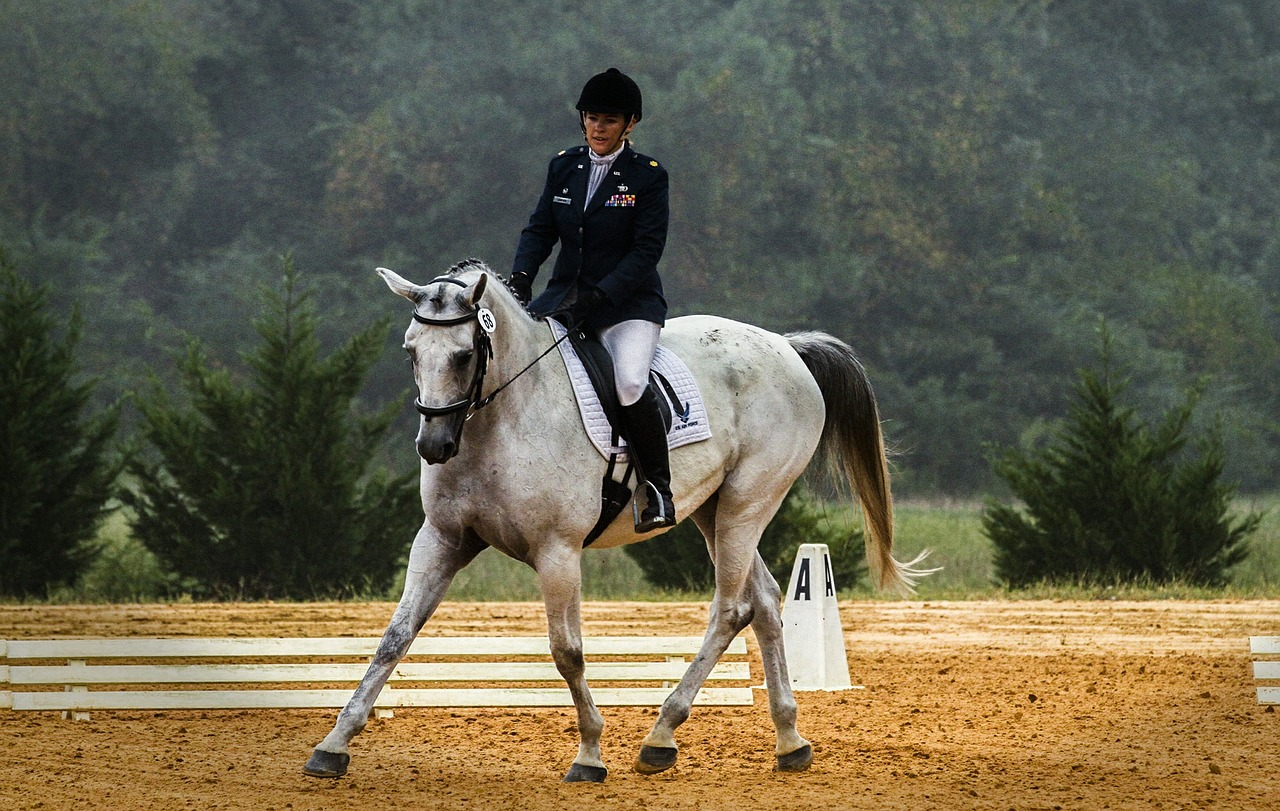 Your Lizard Brain is why a dressage judge can send your heart pounding and wipe your brain clean of everything you know!