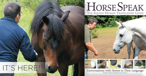 horsespk-herefb