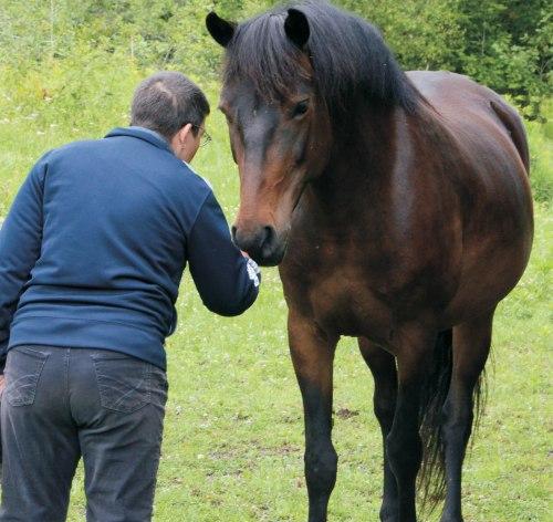 HorseSpeakSharon3