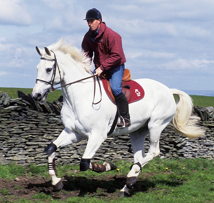 Considering the Horse: Tales of Problems Solved and Lessons Learned Mark Rashid