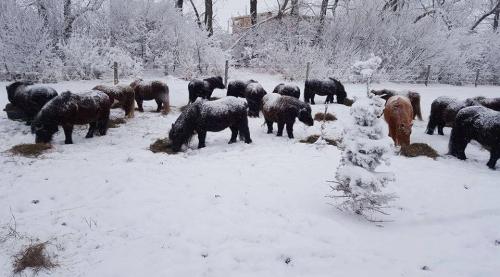winterfeeding