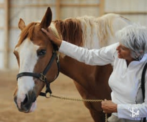 Ear Release Photo by Patti Bose-horseandriderbooks