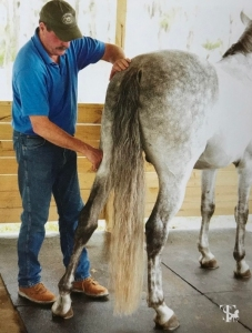 Hind End Release Photo by Deb Kalas-horseandriderbooks