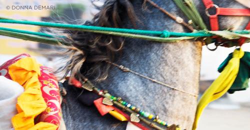 PhotosinIndiaDonnaDeMari-horseandriderbooks
