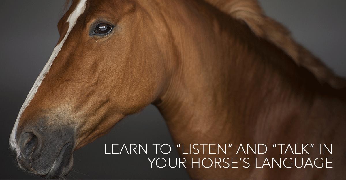 HorsesinTranslation-horseandriderbooks