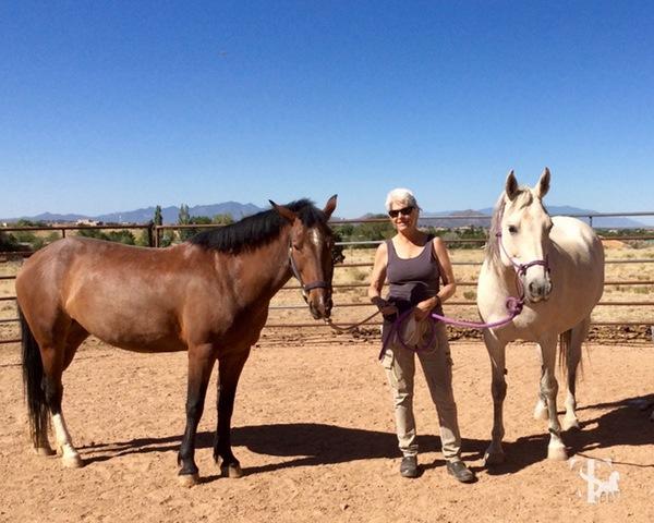 MargretHenkels-horseandriderbooks