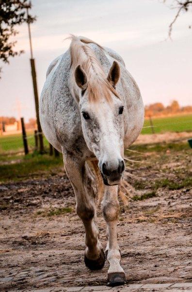 horsewalking-horseandriderbooks