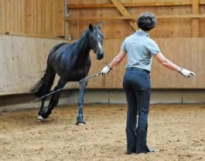 DressageTrainingInHand2-horseandriderbooks