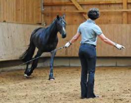 DressageTrainingInHand2-horseandriderbooks