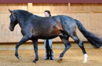 DressageTrainingInHand3-horseandriderbooks