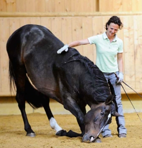 DressageTrainingInHand4-horseandriderbooks