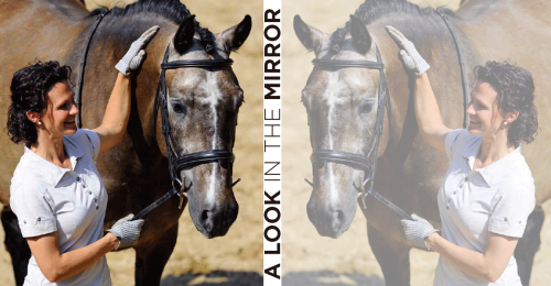 DressageTrainingInHandMain-horseandriderbooks