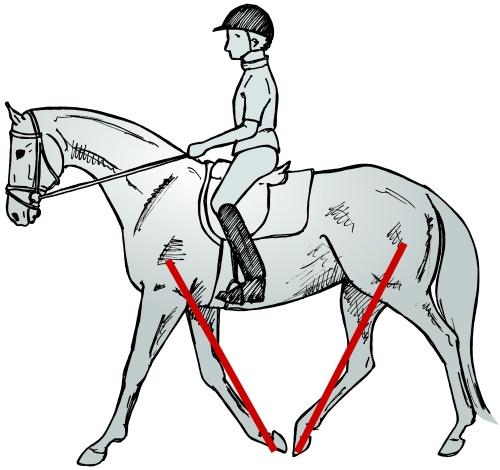 RideBetterwithChristophHess-horseandriderbooks