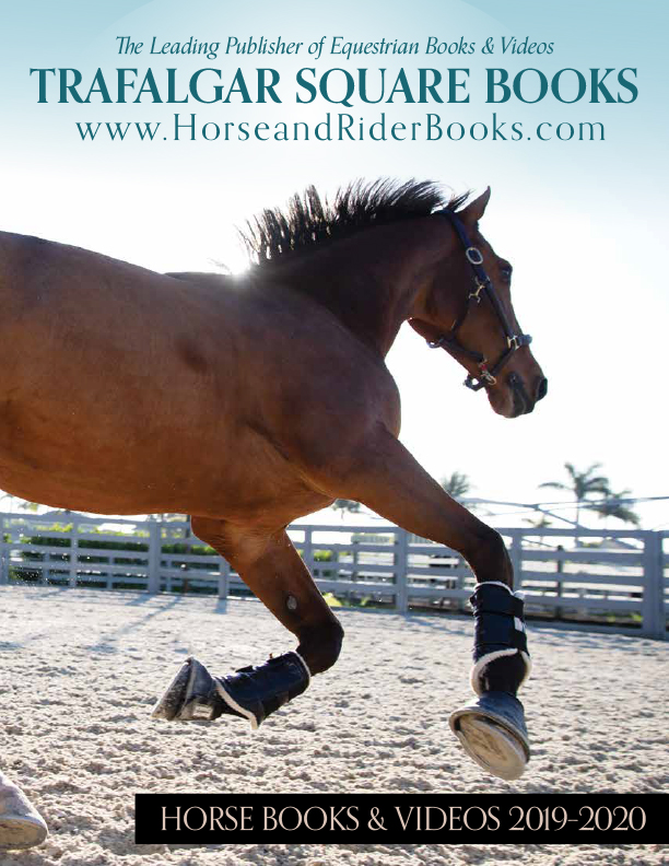 bay horse galloping in round pen